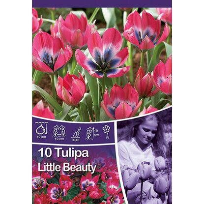 "Botanische Tulpe ""Little Beauty"""
