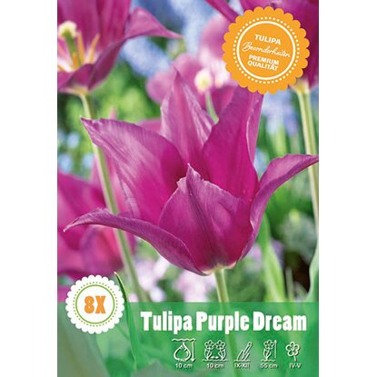 "Lilienblütige Tulpe ""Purple Dream"""