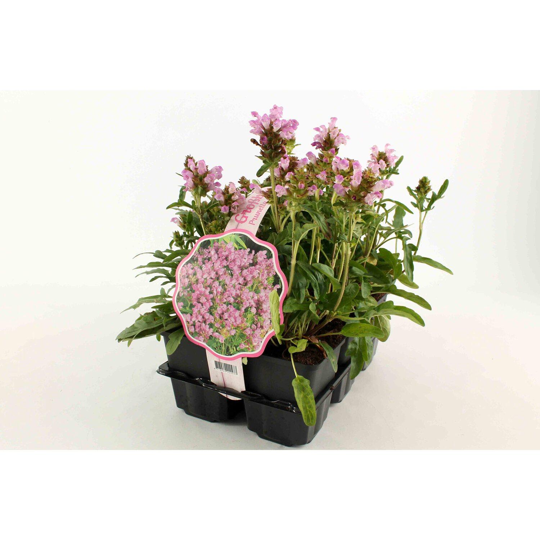 Bodendecker Prunella Grandiflora Bella Rosa Kaufen Bei OBI