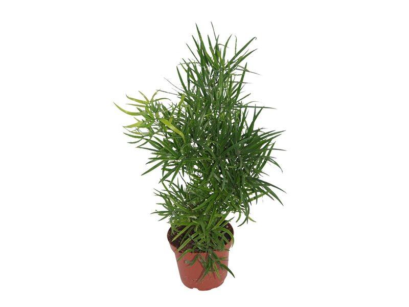 Zimmerpflanzen Kaufen Bei Obi Obi Ch