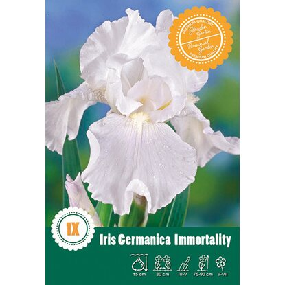 "Iris Germanica ""Immortality"" Weiss"