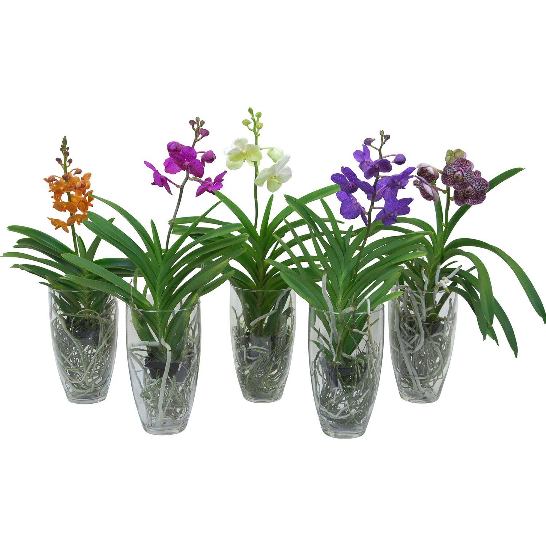 orchideen kaufen bei obi. Black Bedroom Furniture Sets. Home Design Ideas