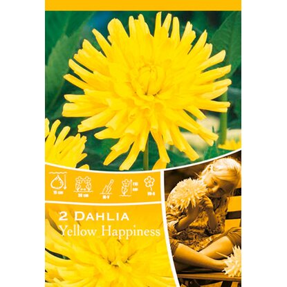 "Dahlien ""Yellow Happiness"" Gelb"