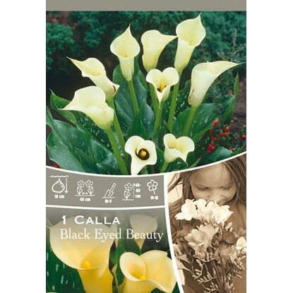"Calla ""Black Eyed Beauty"" Creme"