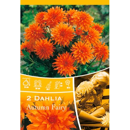 "Dahlien ""Autumn Fairy"" Orange"