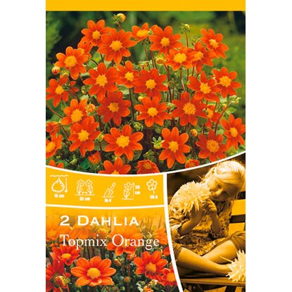 Dahlien Topmix Orange