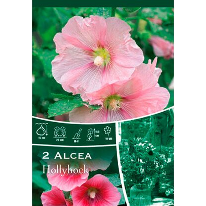 "Stockrosen ""Hollyhock"" Pink"