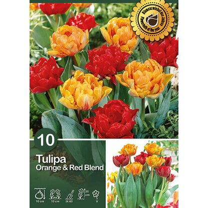 "Tulpen-Mix gefüllt/ früh ""Orange & Red Blend"""