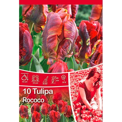 "Papagei Tulpe ""Rococo"""