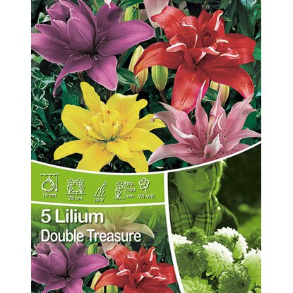"Lilien ""Double Treasure"" Mischung"