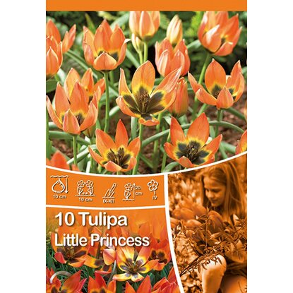 "Botanische Tulpe ""Little Princess"""
