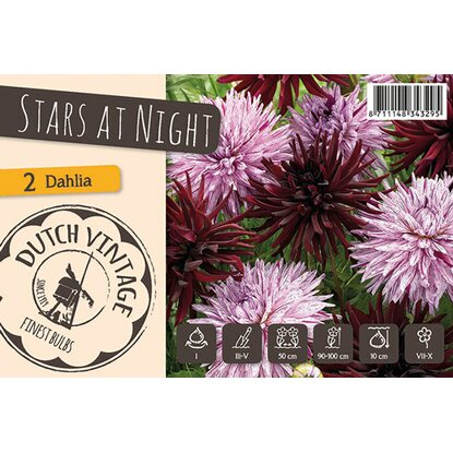 "Dahlien ""Stars at Night"" Mischung"