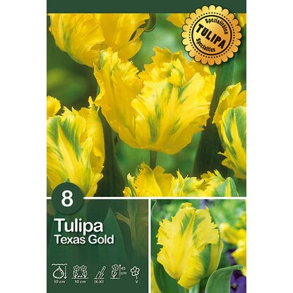 "Papagei Tulpen ""Texas Gold"" Gelb"