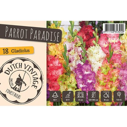 "Gladiolen ""Parrot Paradise"" Mischung"