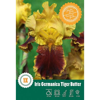 "Iris Germanica ""Tiger Butter"" Gelb mit Orange"